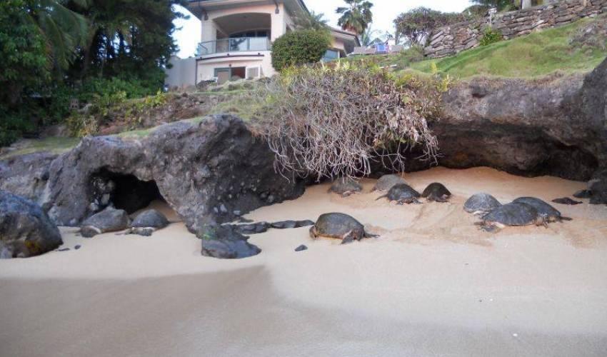 Villa 848 in Hawaii Main Image